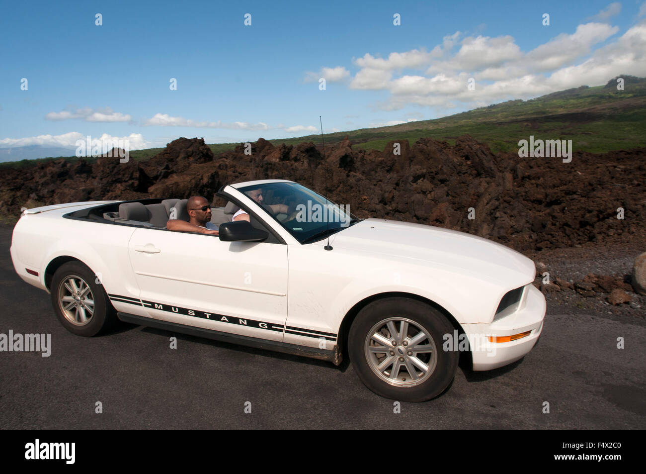 White mustang in Cinder cones in the Haleakala National Park. Views from the viewpoint of Leleiwi. Maui. Hawaii. - Stock Image