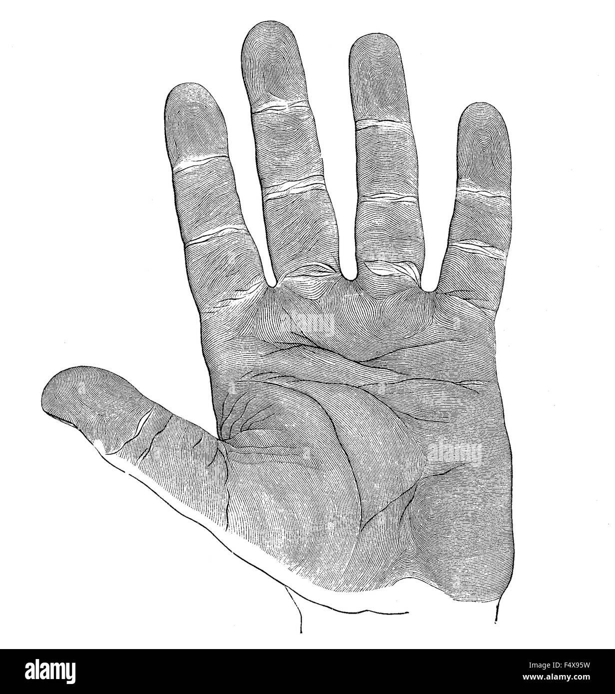 Vintage Engraving Anatomy Human Hand Palm Stock Photo 89088437