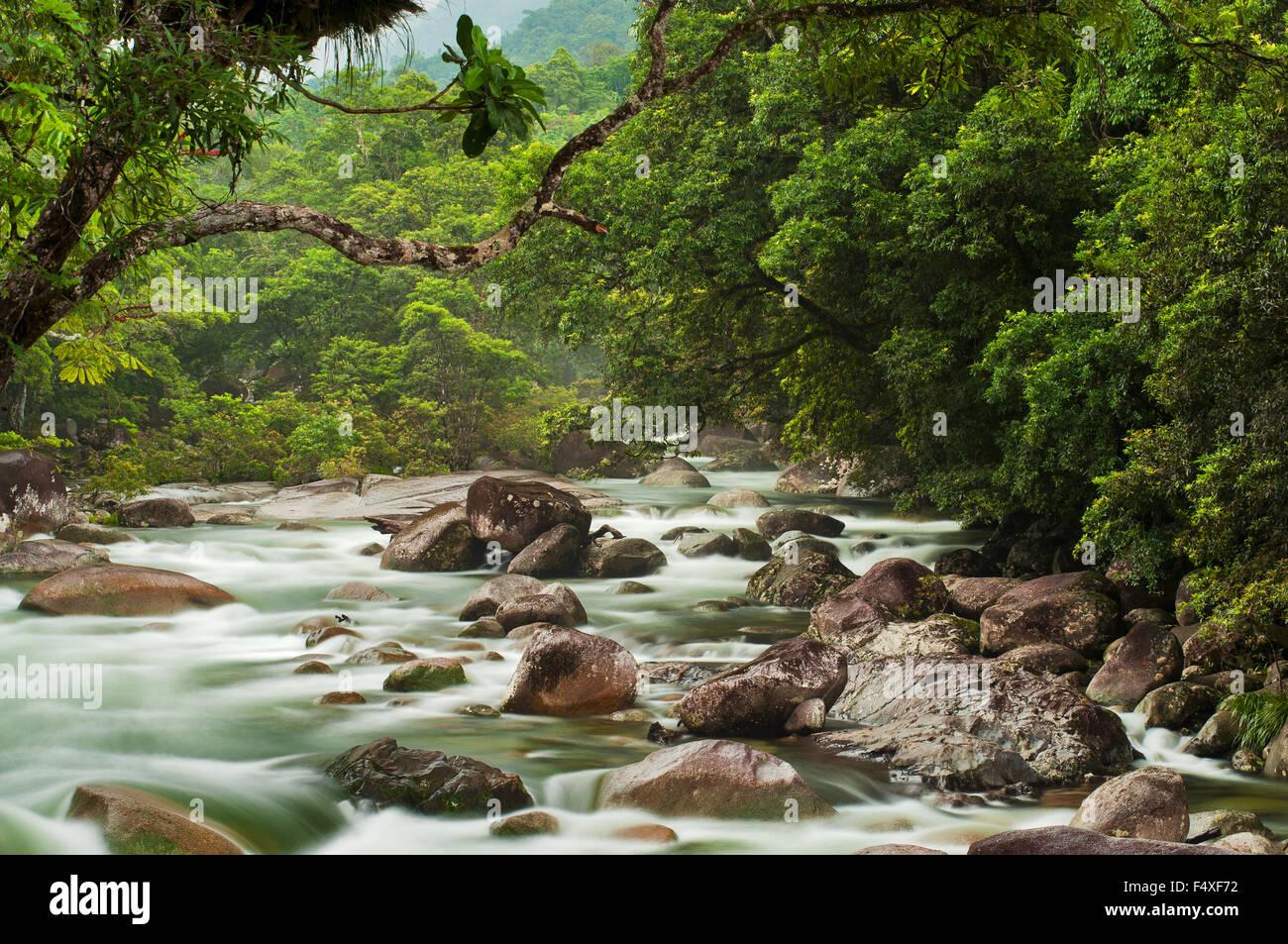 Rainforest scenery in Mossman Gorge. - Stock Image