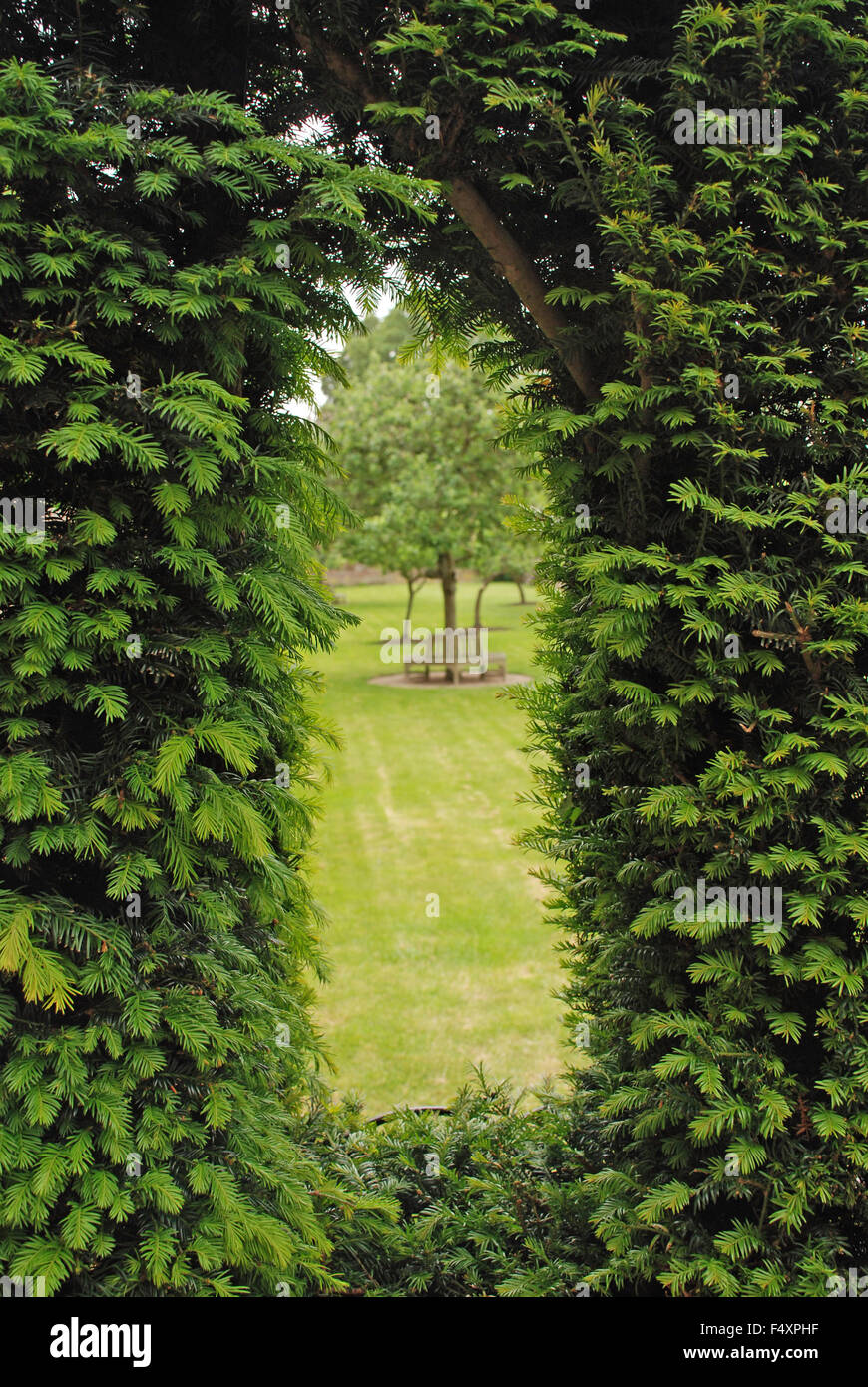 Hedge Cutting Topiary Stock Photos & Hedge Cutting Topiary Stock ...