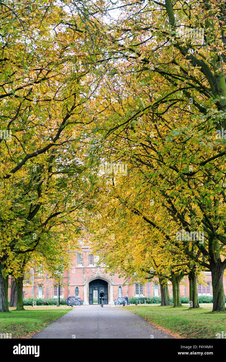 Cambridge, UK. 24th October, 2015. Vibrant autumn colours brighten an overcast day in Cambridge. The avenue of trees - Stock Image