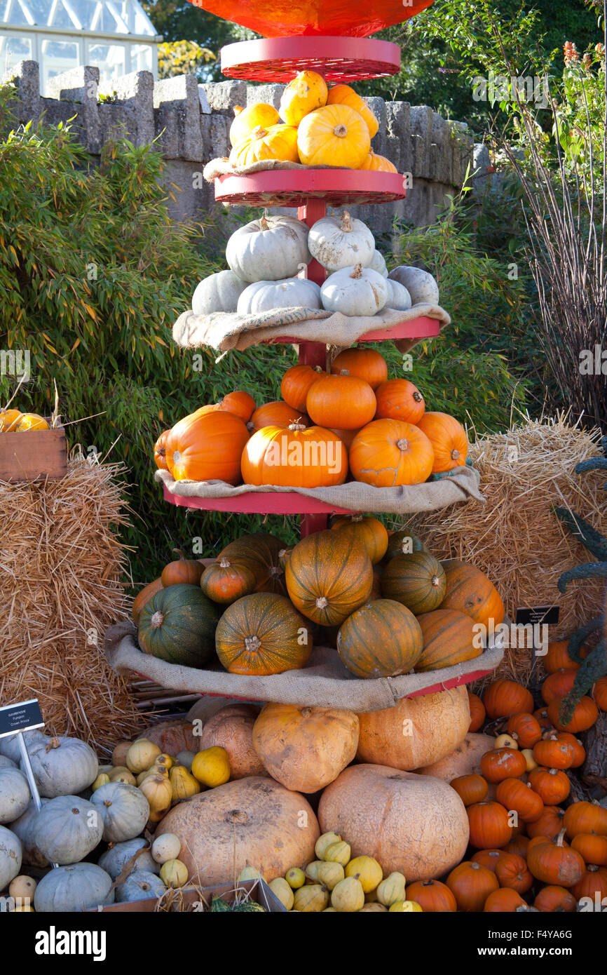 Pumpkin displays at the naional botanic garden celebrating - Botanic gardens pumpkin festival ...