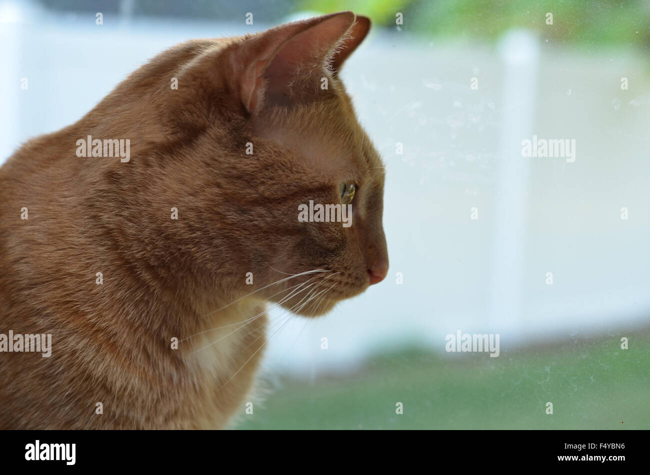 outdoors cat tabby green day dream daydream outside go thinking watching spying - Stock Image