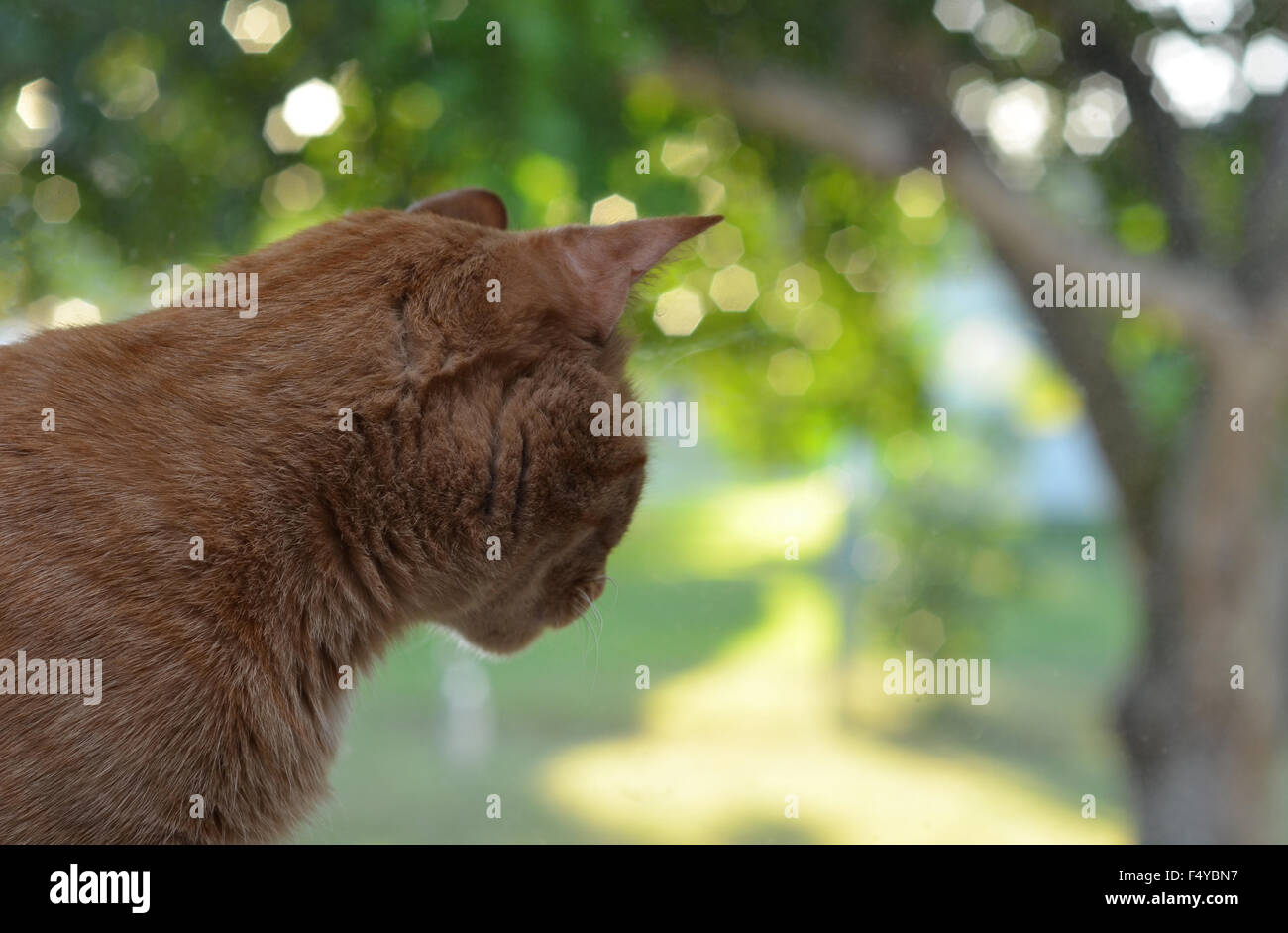 outdoors cat tabby green day dream daydream outside go - Stock Image