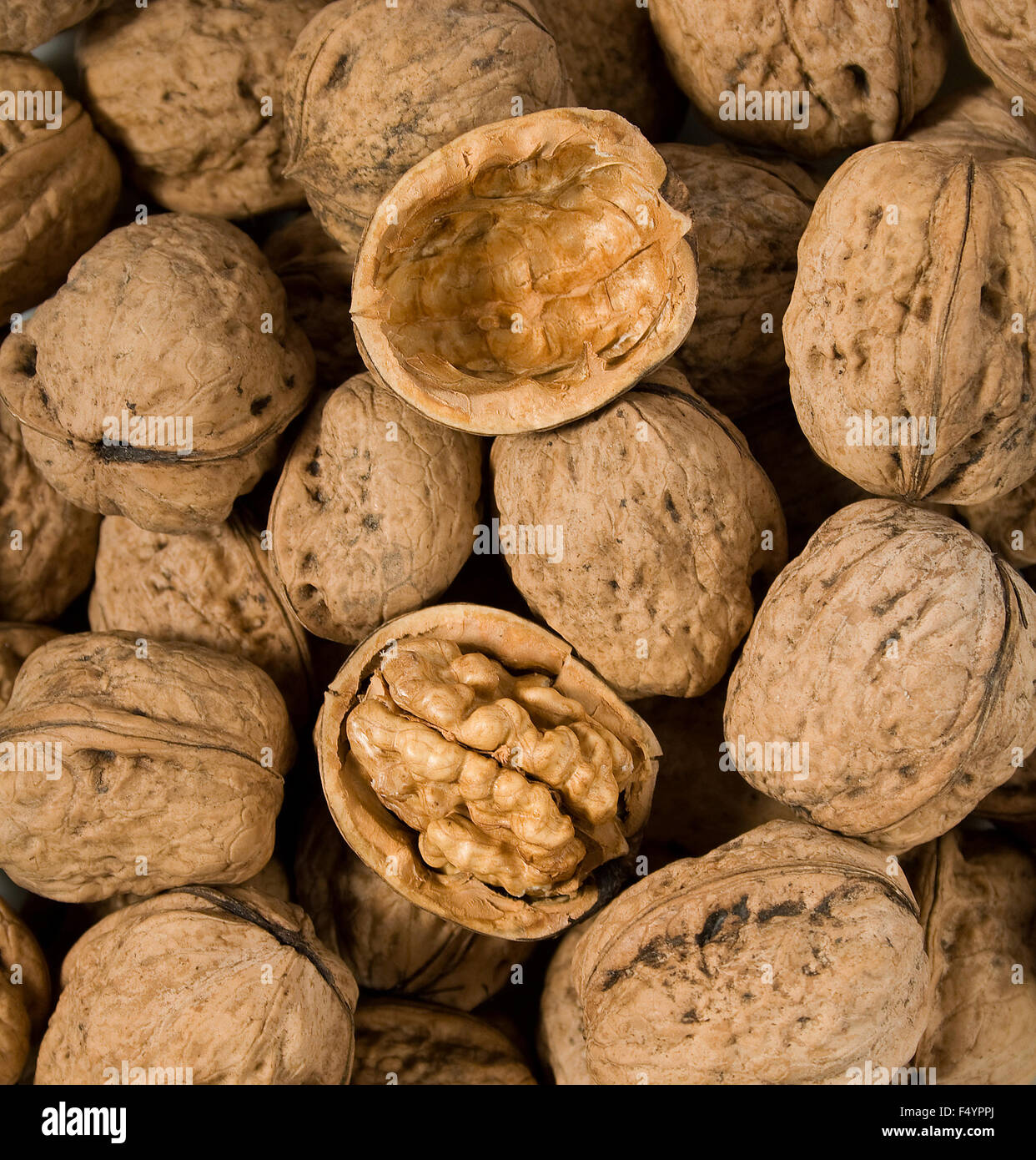 One open walnut amid other whole walnuts - Stock Image