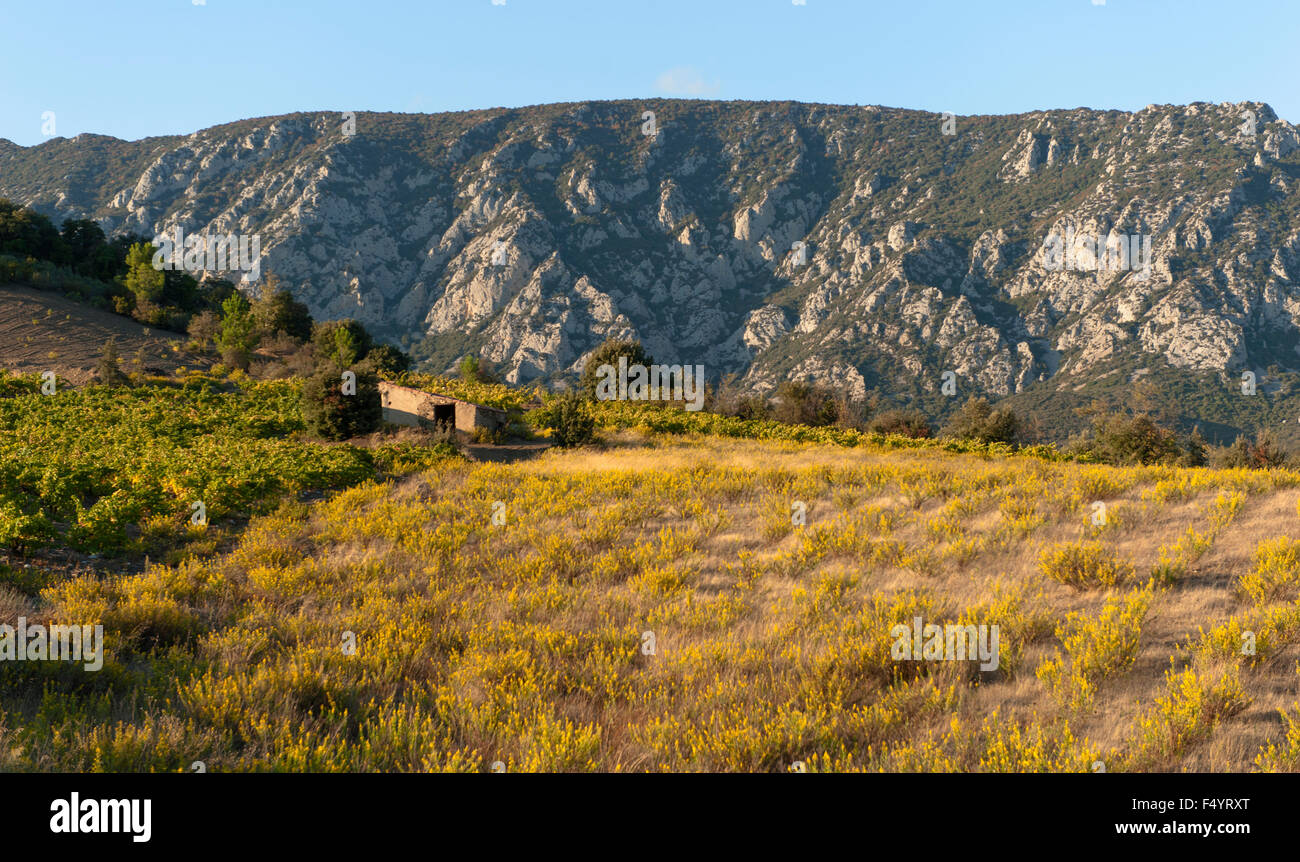 Wine growing in autumn near Maury, Pyrenees-Orientales, France Stock Photo