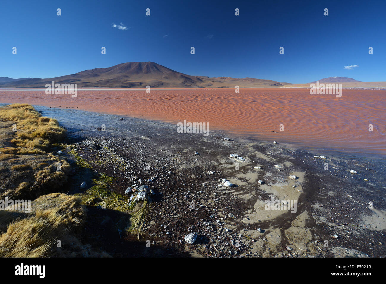 Laguna Colorada with red water caused by high algae content, in Uyuni, Lipez, Bolivia - Stock Image