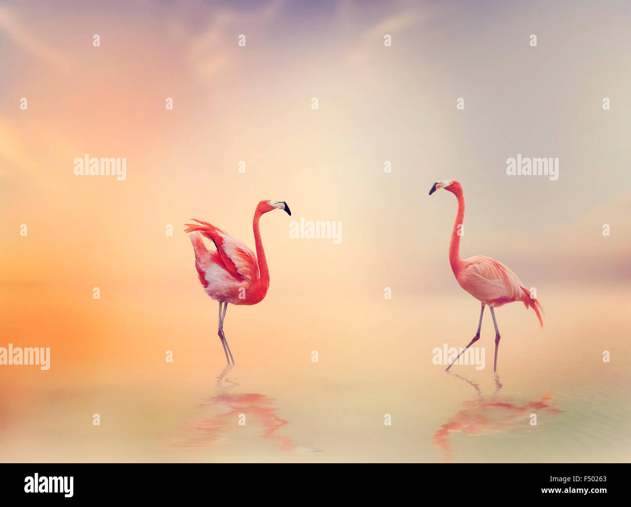 Two Flamingos in The Lake at Sunset - Stock Image