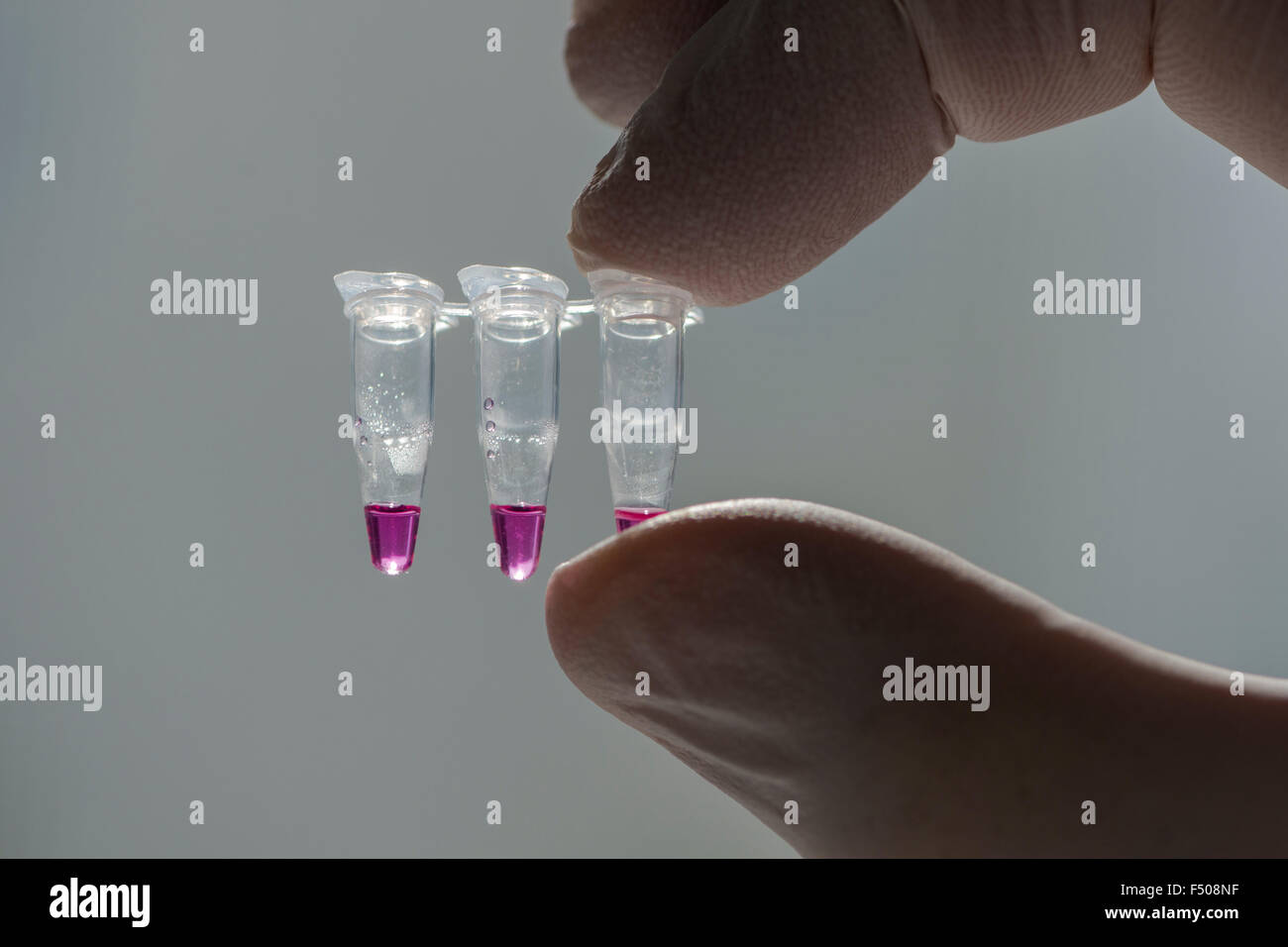 PCR-Single Caps for Polymerase Chai Reaction, PCR, held against the light by a laboratory assistent hand - Stock Photo