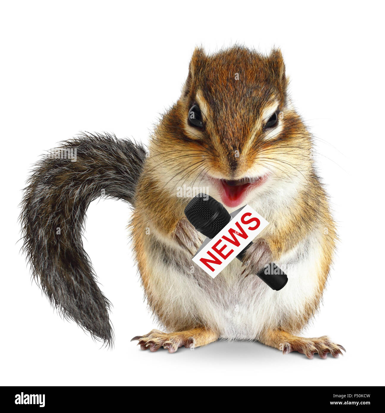 Funny animal squirrel with news microphone on white - Stock Image