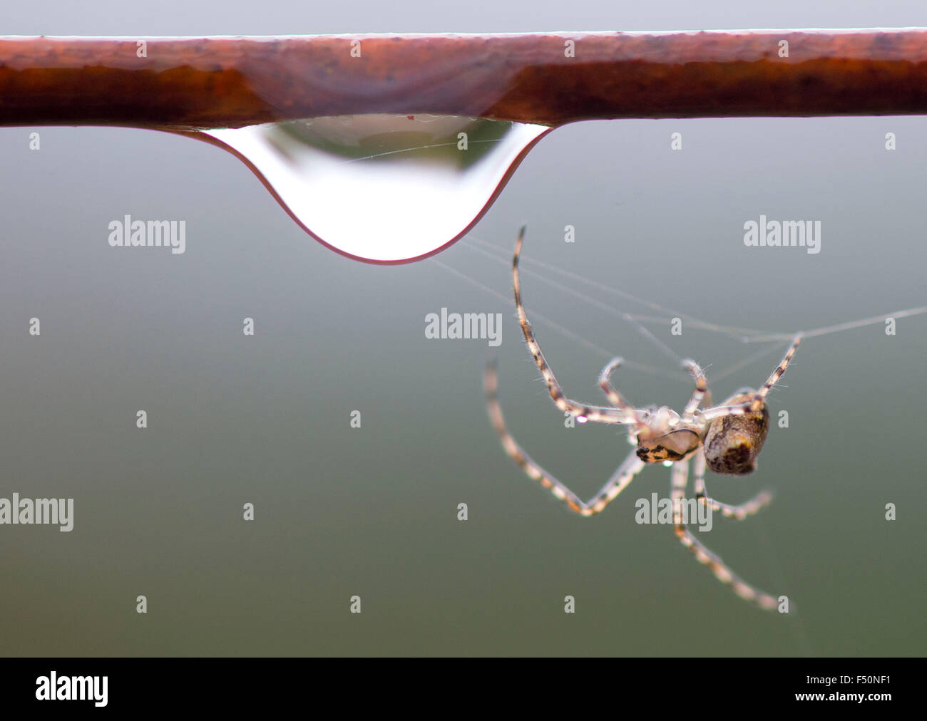 Elkton, Oregon, USA. 25th Oct, 2015. A small spider weaves its web ...