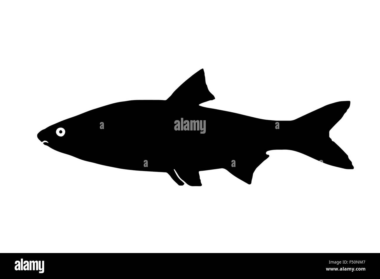 Silhouette freshwater fish Sneep, that lives in lakes and fast and clear rivers. Stock Photo