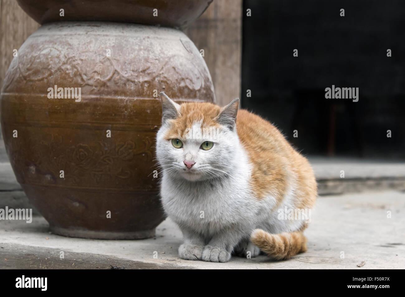 Crouching cat and vase, Shiqiao Miao Village, Guizhou Province, China - Stock Image