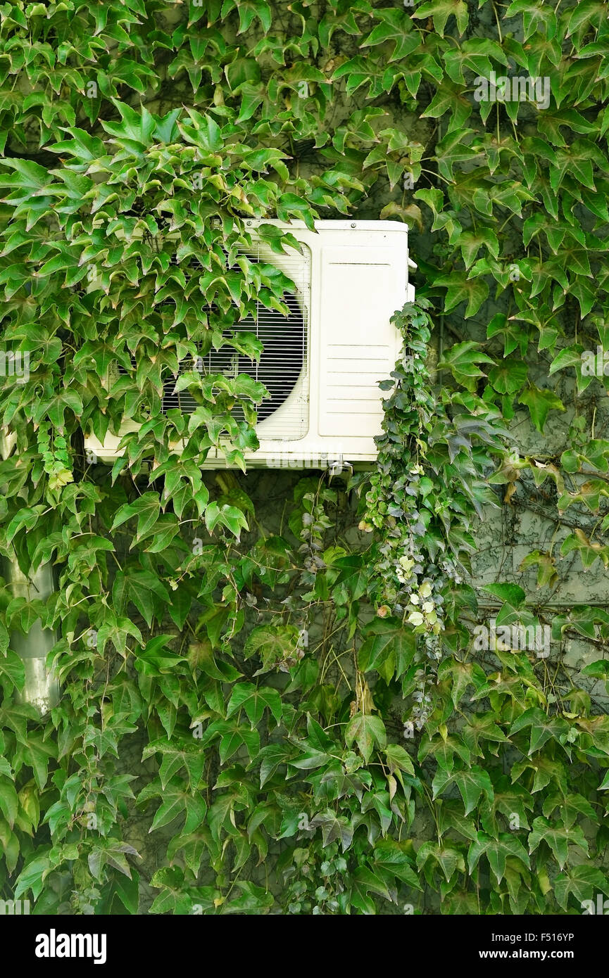 Detail shot with green ivy on a house wall covering an air conditioner Stock Photo