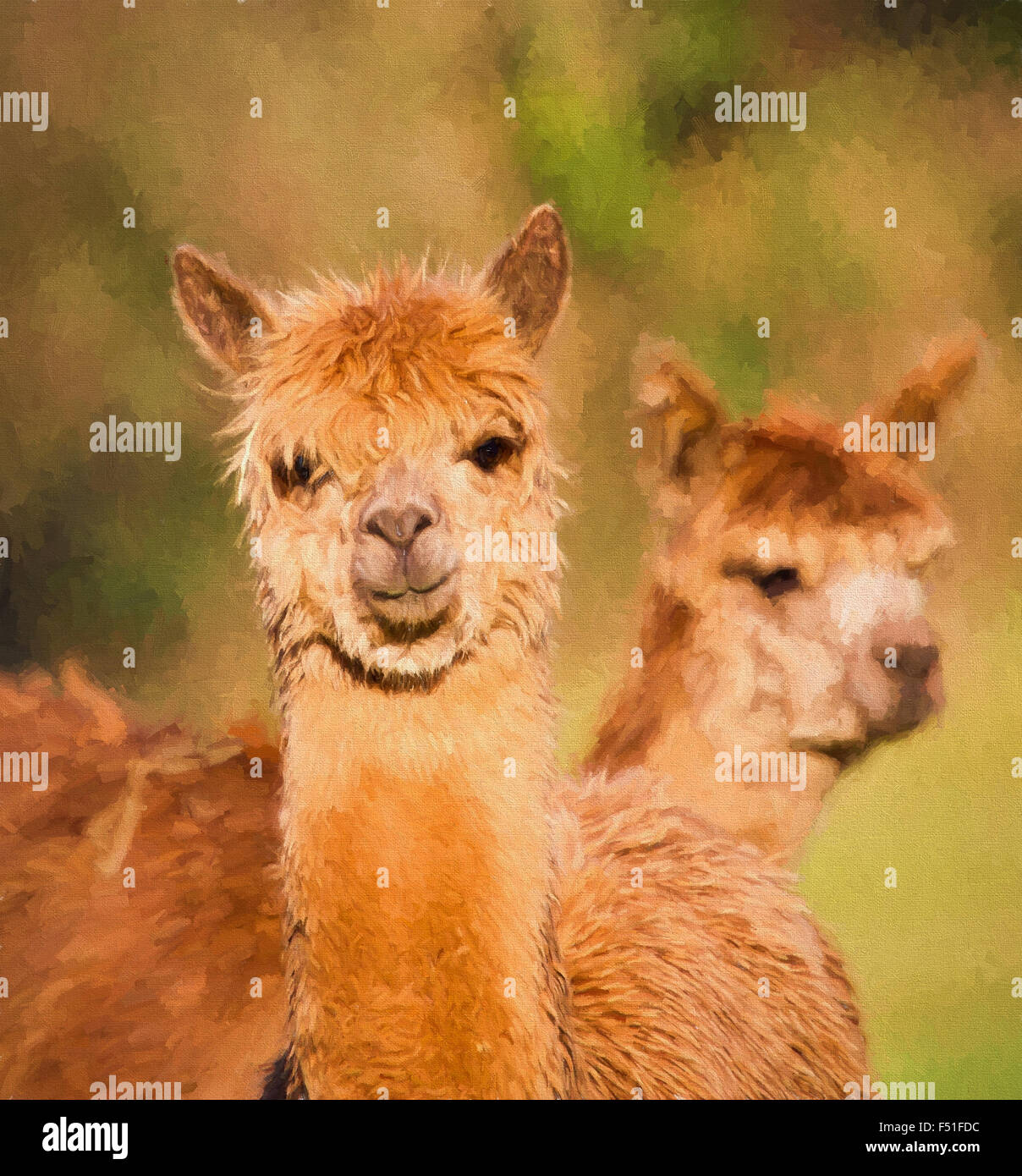 Brown Alpacas portrait similar to llama illustration like oil painting - Stock Image