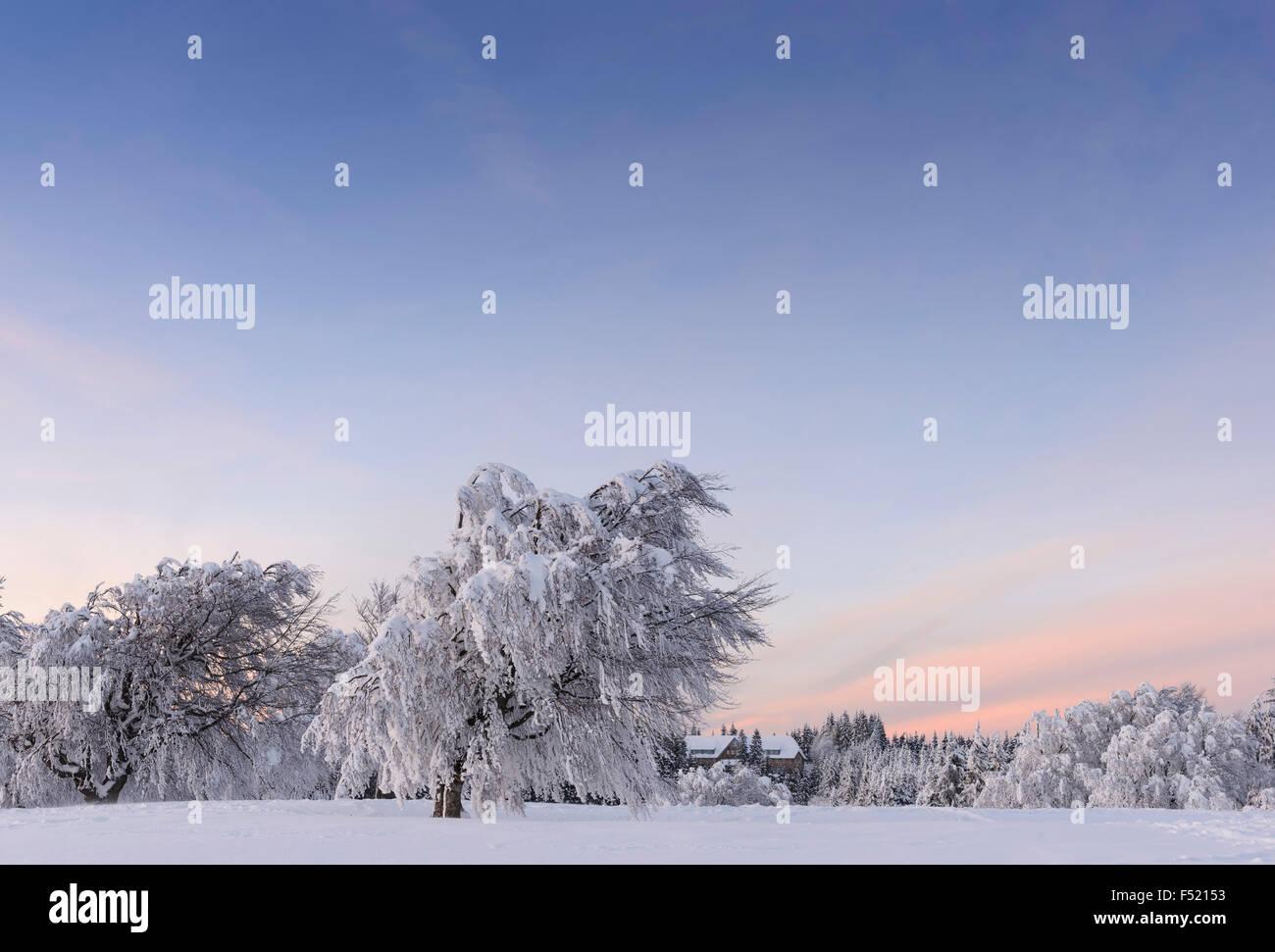 Deutschland, Baden-Württemberg, Schwarzwald, Schauinsland, Schneebedeckte Bäume bei Sonnenuntergang, - Stock Image