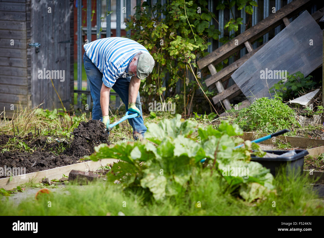Affinity Sutton's Sunny Brow lounge in Gorton resident working on his allotment space gardening working hard - Stock Image
