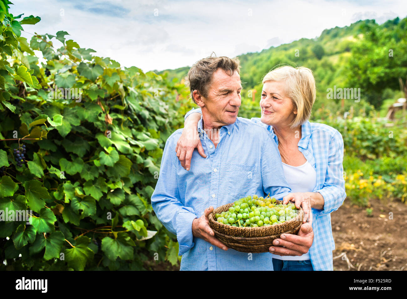 Couple harvesting grapes - Stock Image