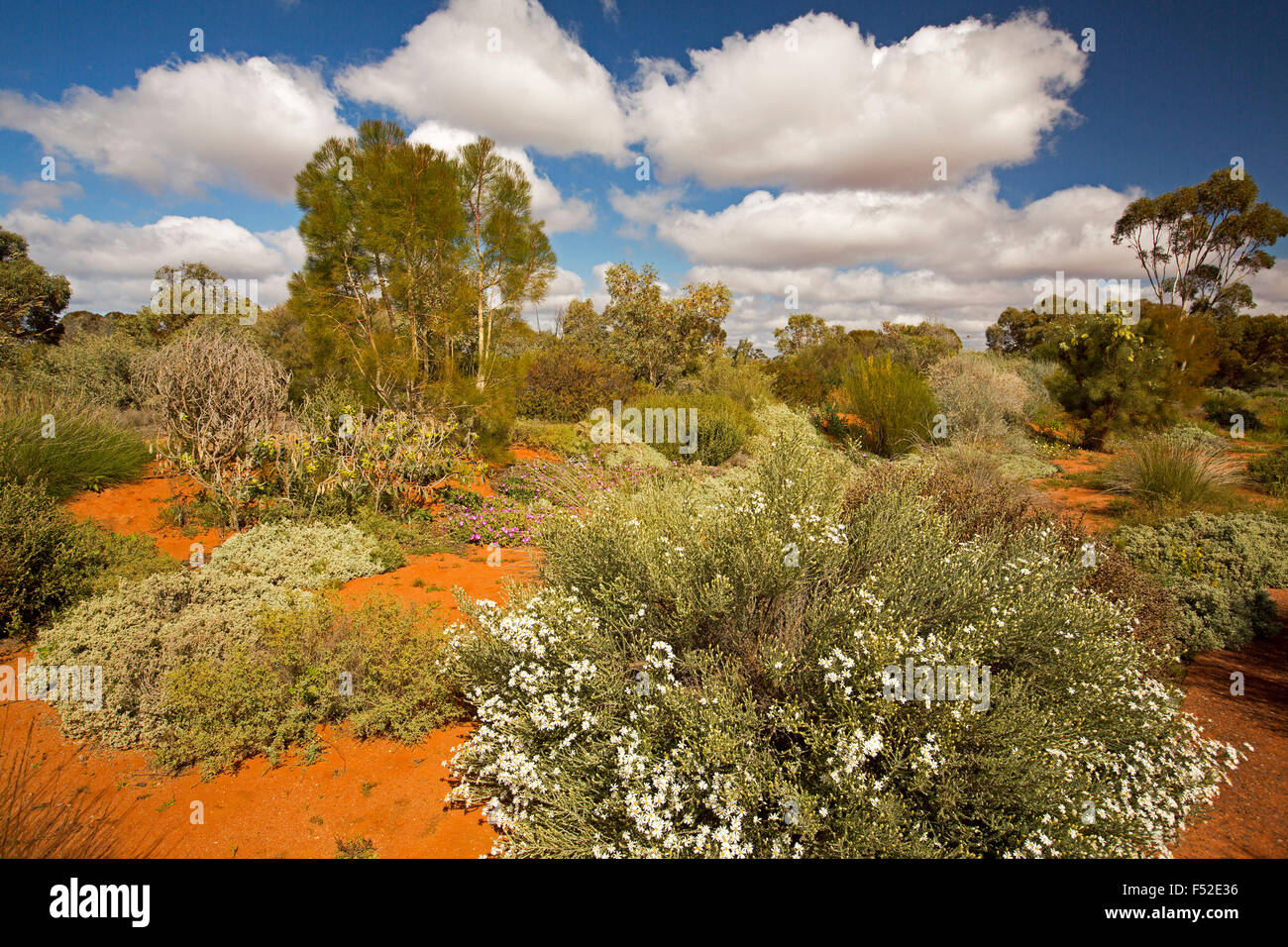 Colourful landscape with masses of wildflowers in red soil under ...