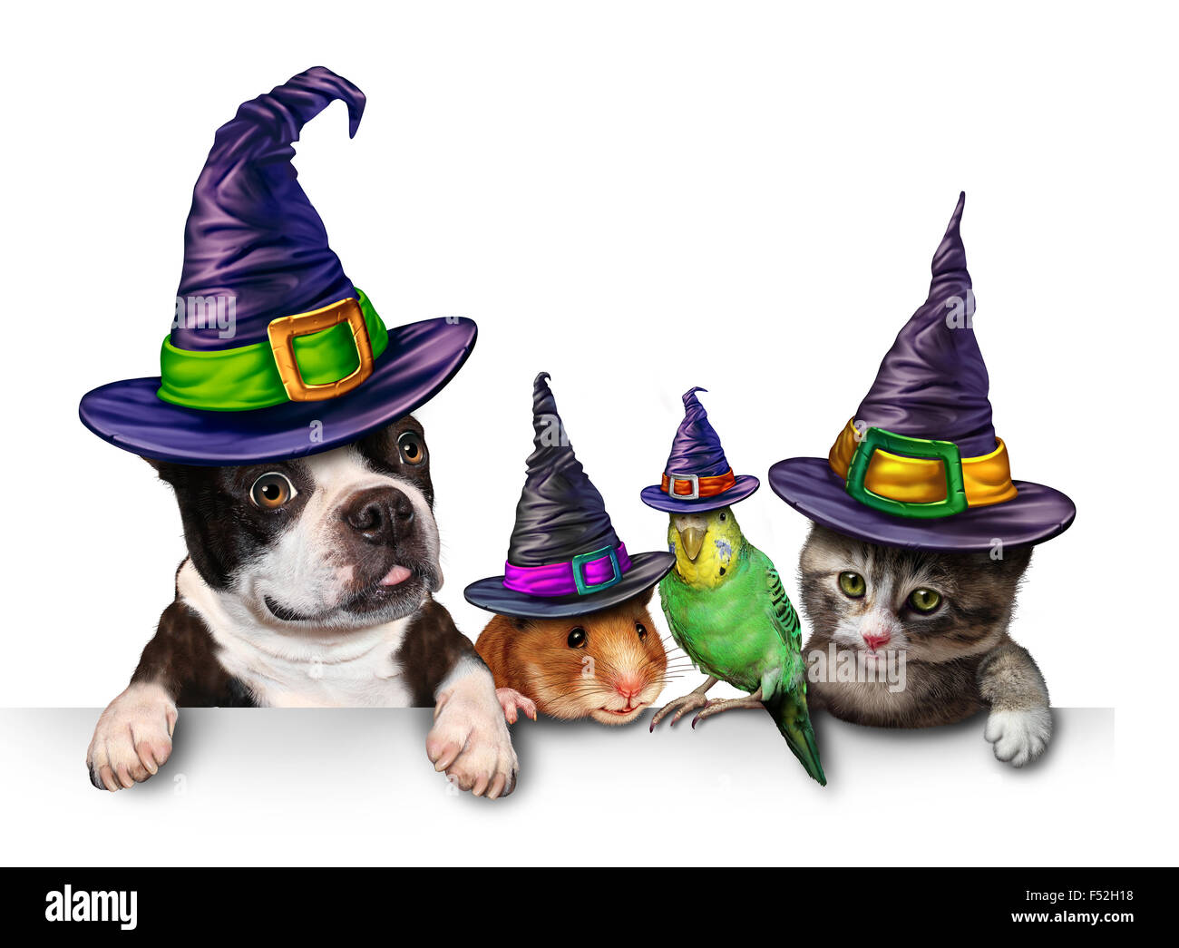 Halloween Pet blank sign with a fun cat happy dog cute hamster and budgie each wearing a witch hat head garment - Stock Image