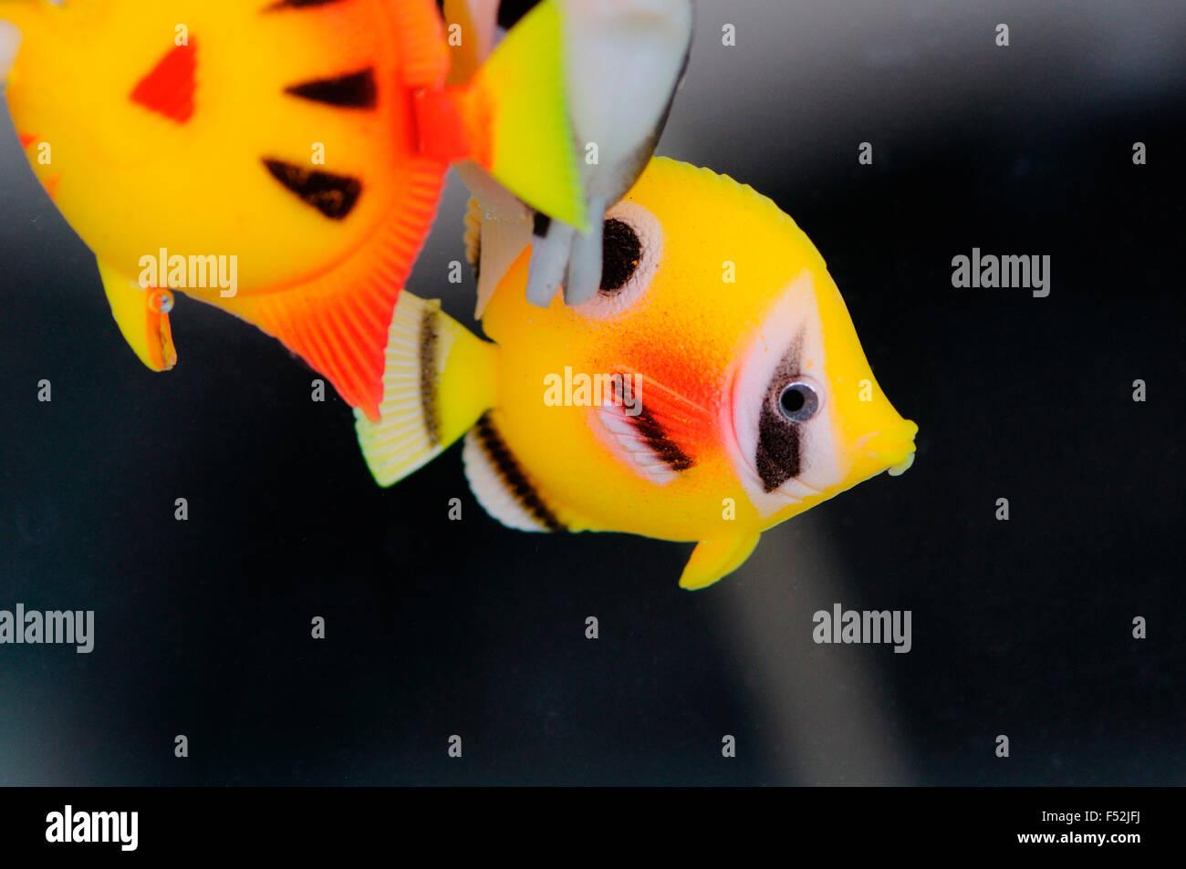 Plastic Fish Stock Photos & Plastic Fish Stock Images - Alamy