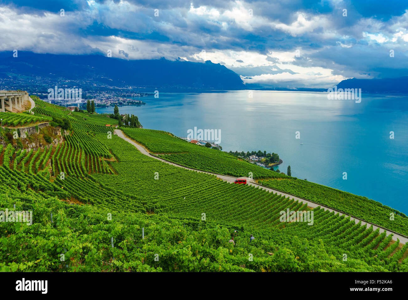 Looking out from the vineyards at Lavaux, a UNESCO World Heritage Site. Lake Geneva, Switzerland. - Stock Image