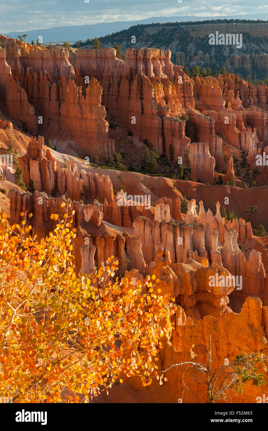 View on Navajo Trail, Bryce Canyon, Utah, USA - Stock Image