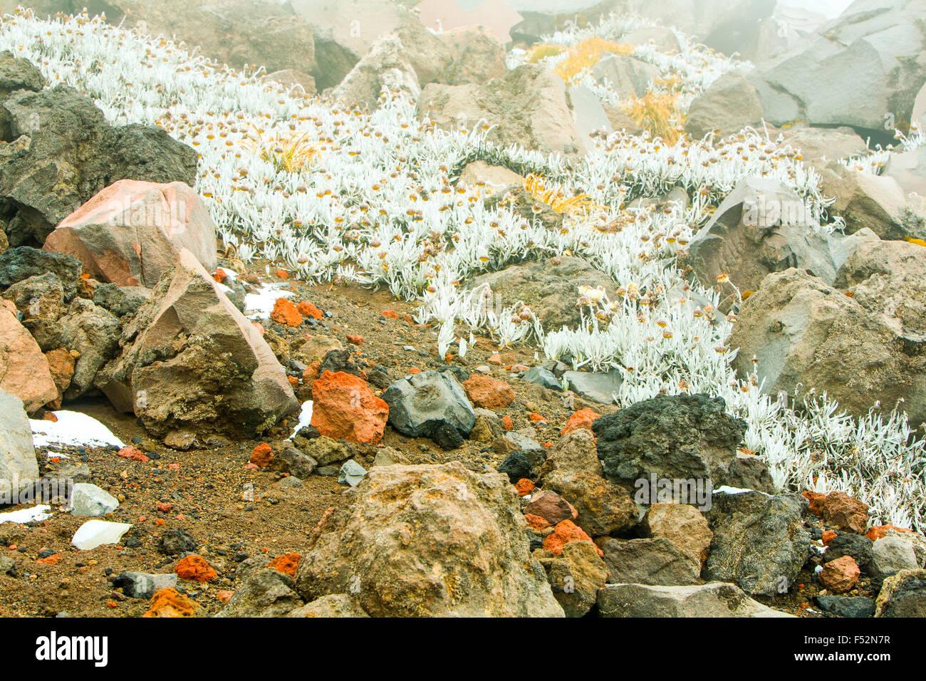 Misty Blue Haze Over The Cotopaxi Volcano Ecuador Expodisc Calibrated White Balance - Stock Image