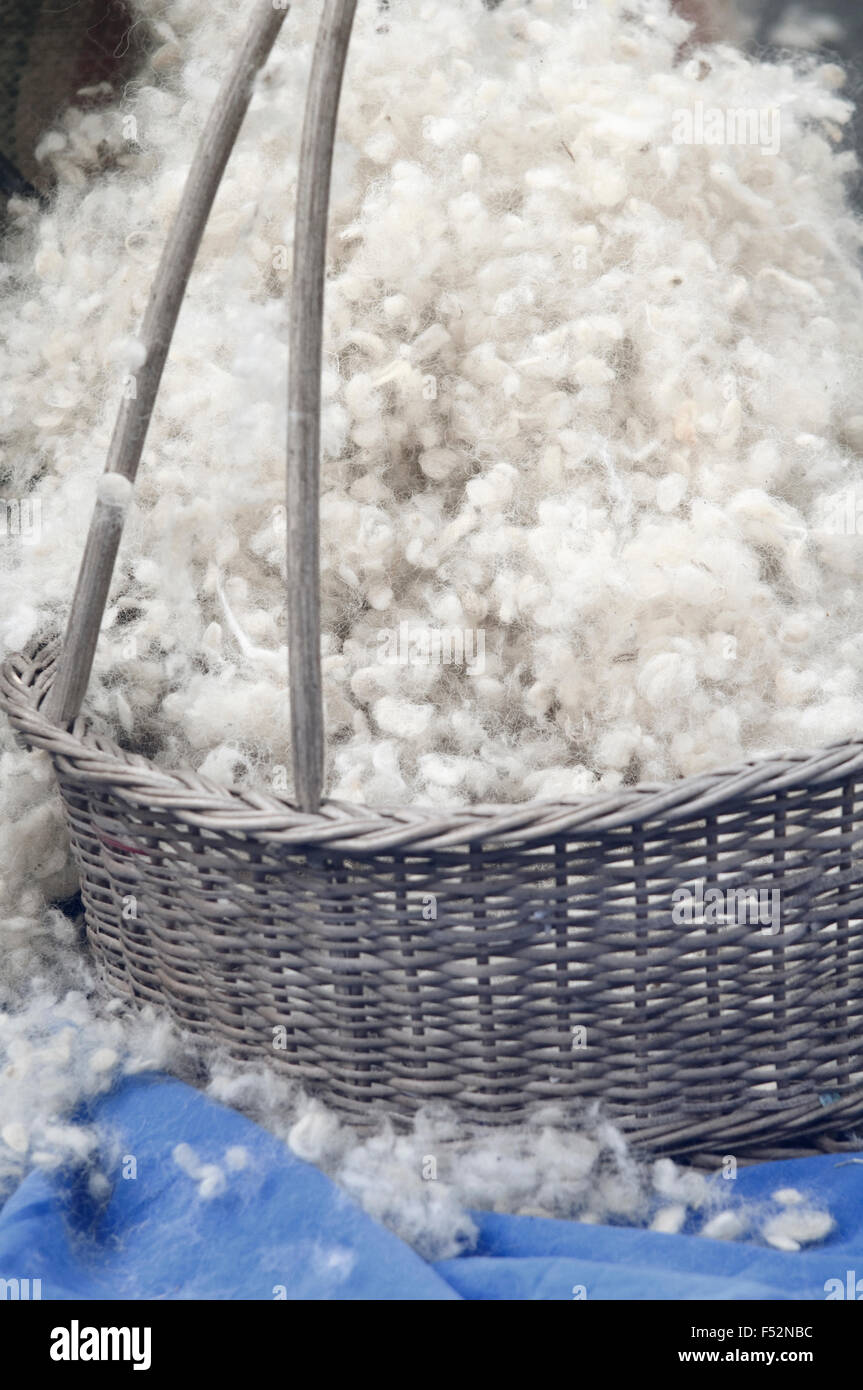 Italy, Lombardy, Carding Wool - Stock Image