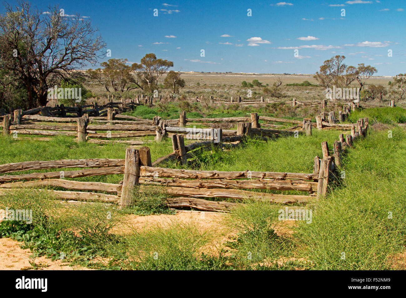 Stock yards made from cypress pine in Australian outback landscape of emerald grass after rain at old Zanci station Stock Photo