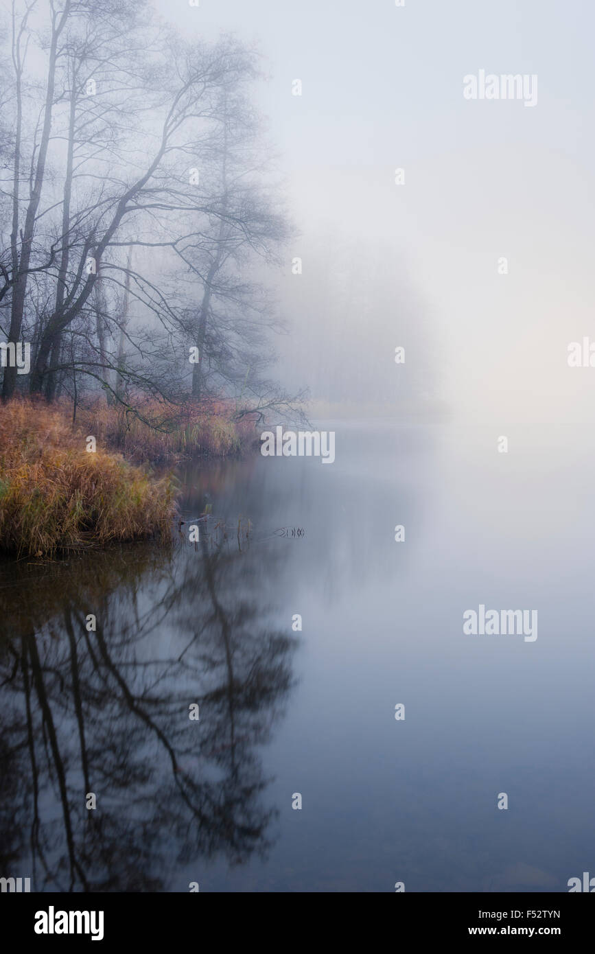 Water, pond, fog, reflexion, light, morning, atmosphere, trees, reeds - Stock Image