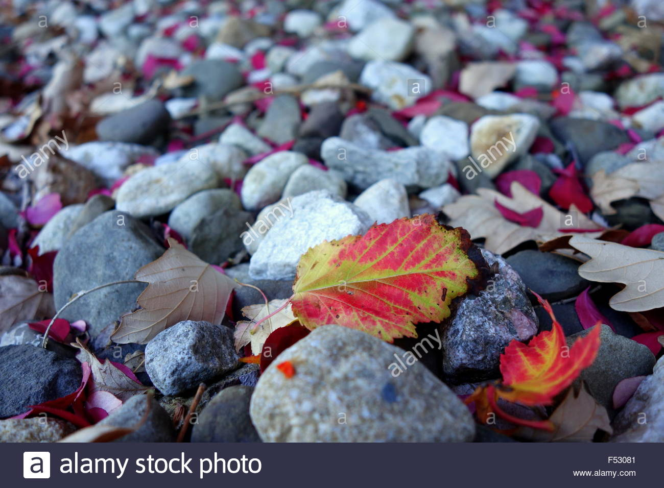 Colorful fall foliage on top of limestones - Stock Image