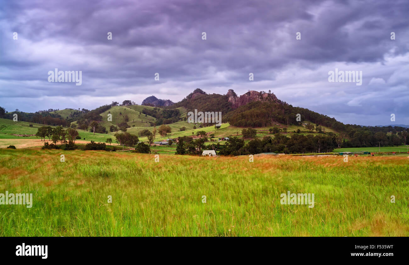 cultivated wheat field in rural agricultural region of Australia on a stormy summer day with Gloucester tops mountains Stock Photo