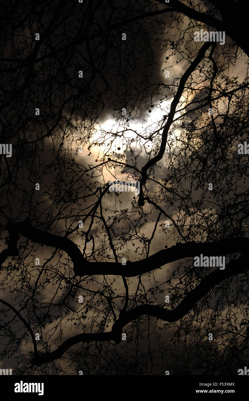 Tree's branches at night. - Stock Image