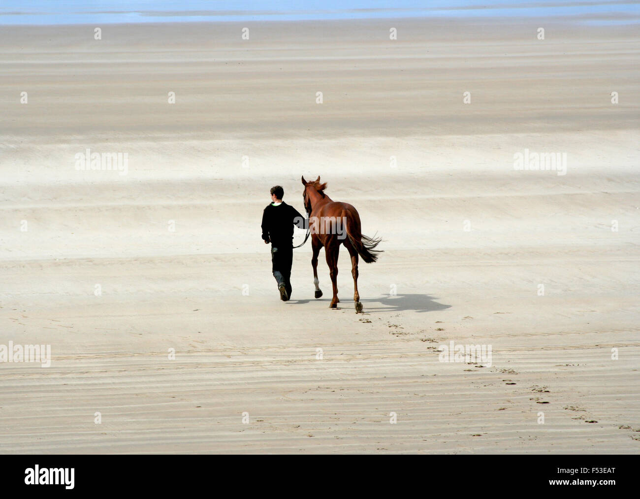 Walking the horse at Doolough races. - Stock Image