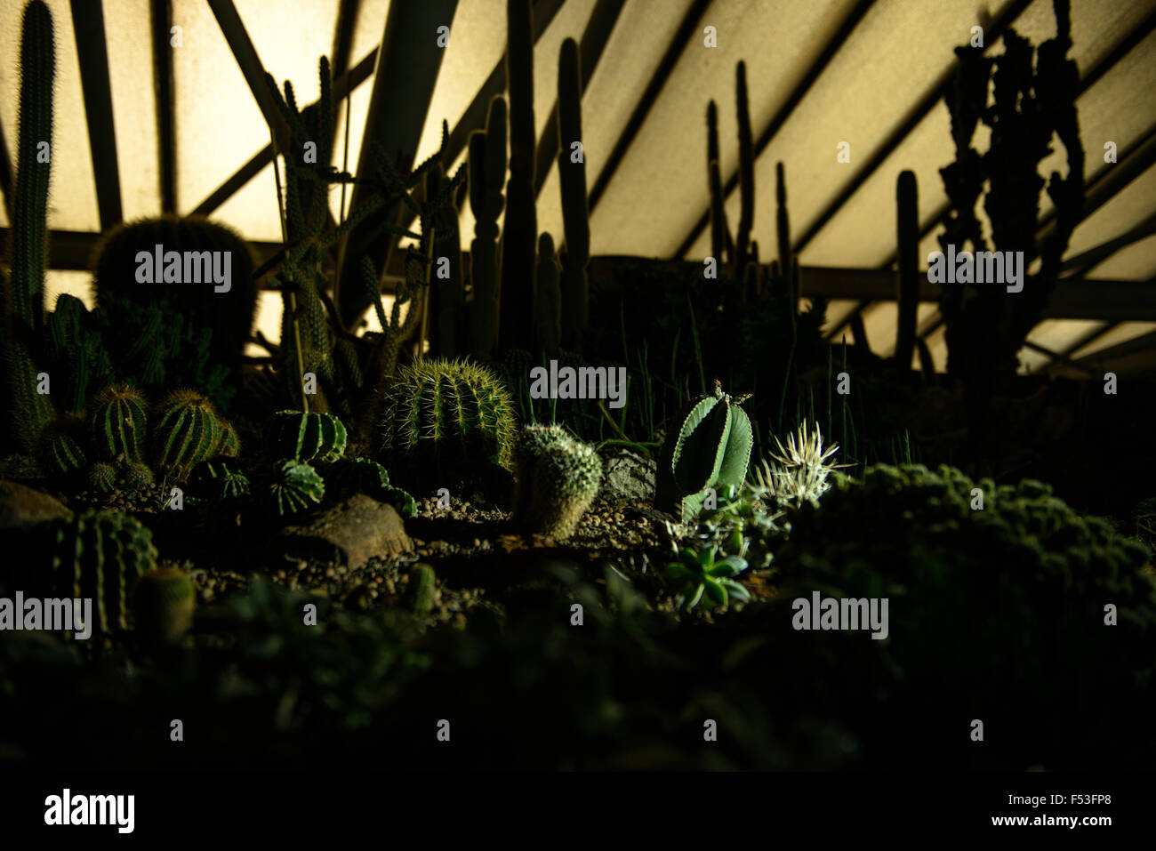 cactusses dramaticaly sidelit in a greenhouse at night - Stock Image