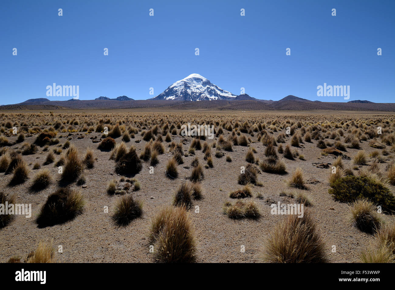 Salaam volcano with ichu grass (Stipa ichu) in Sajama National Park, Altiplano, border to Bolivia, Chile - Stock Image