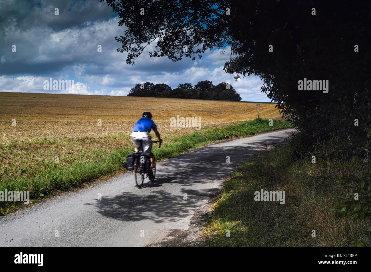 An English country lane in Hertfordshire in front of a field of ripening wheat and with a leisure cyclist passing - Stock Image