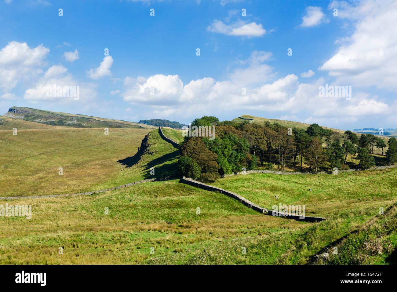 Hadrian's Wall near Housesteads Roman Fort, Northumberland, England, UK - Stock Image