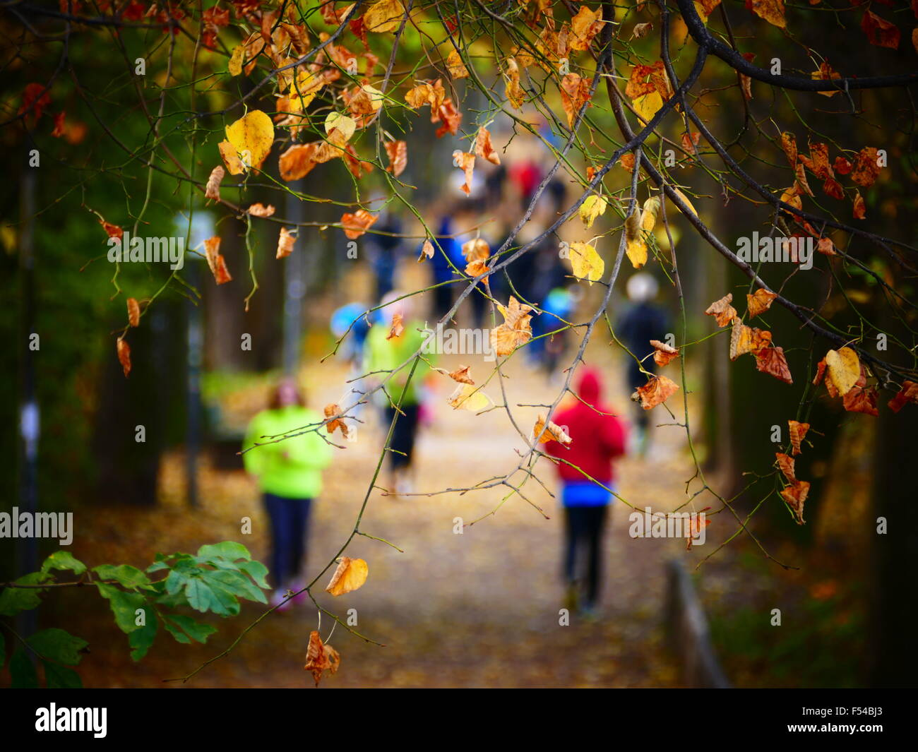 Germany Munich Anonymous Autumn joggers jogging in park - Stock Image
