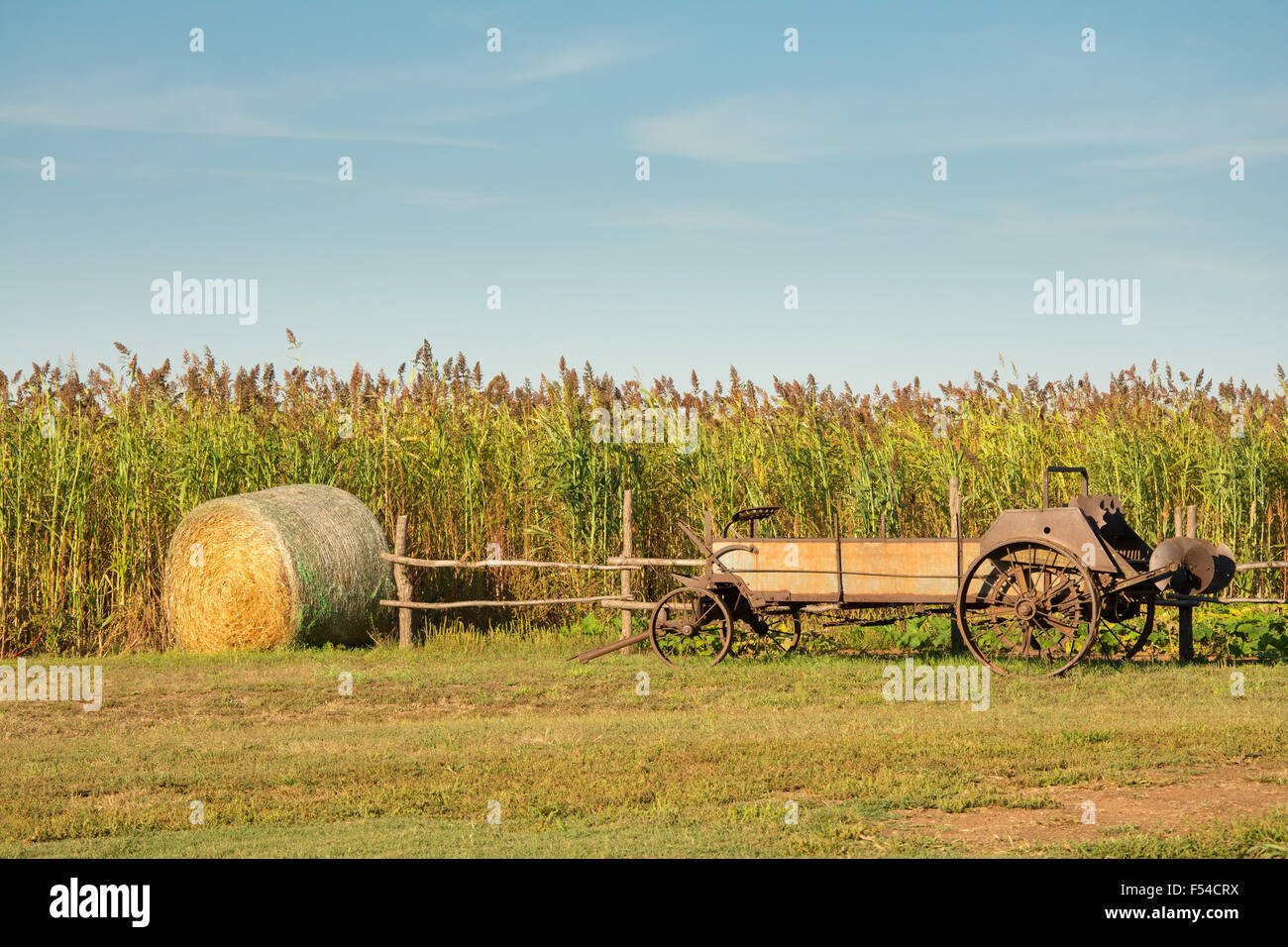An antique manure spreader and a round bale of hay in front of a sorghum field - an agricultural background - Stock Image