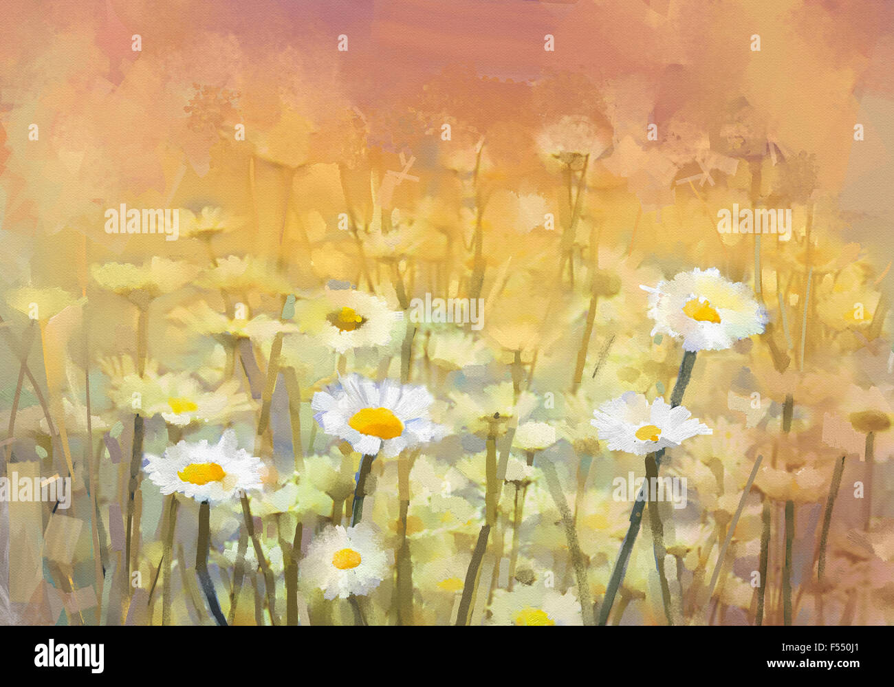 Oil Painting Daisy Chamomile Flowers Field At Sunrise Vintage Stock