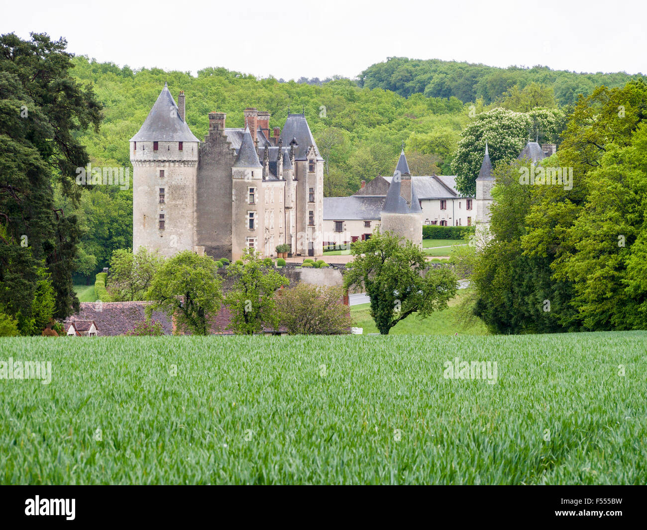 Chateau below a Wheat field. A green crop of wheat frames a view of Château de Montpoupon in the Loire countryside. - Stock Image