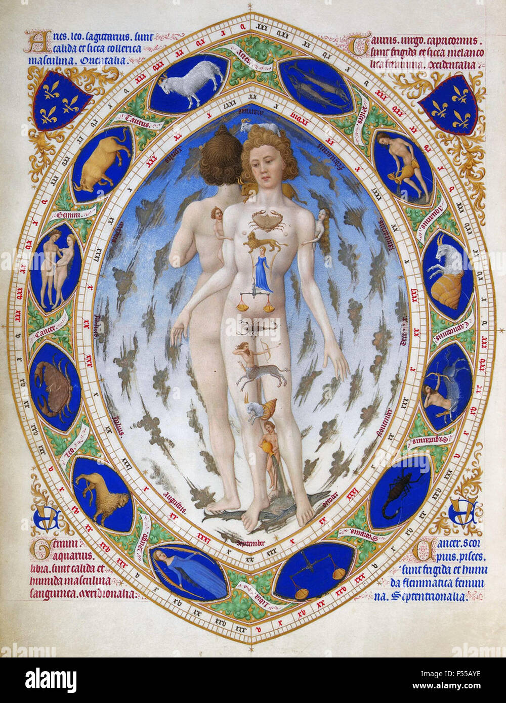 ANATOMICAL ZODIAC MAN from the early 15th century Tres Riches Heures du Duc de Berry - Stock Image