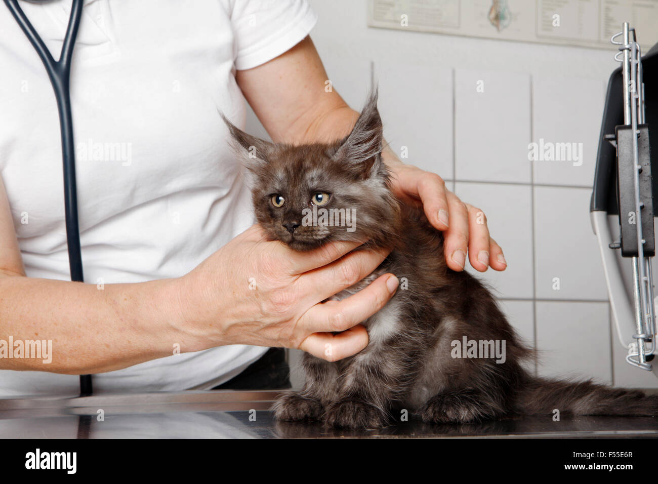 Midsection of vet examining cat's neck at table in clinic - Stock Image
