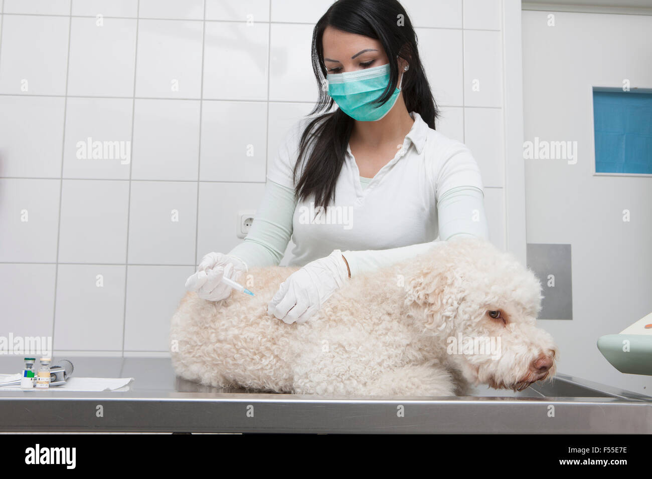 Female veterinarian injecting dog in medical clinic - Stock Image