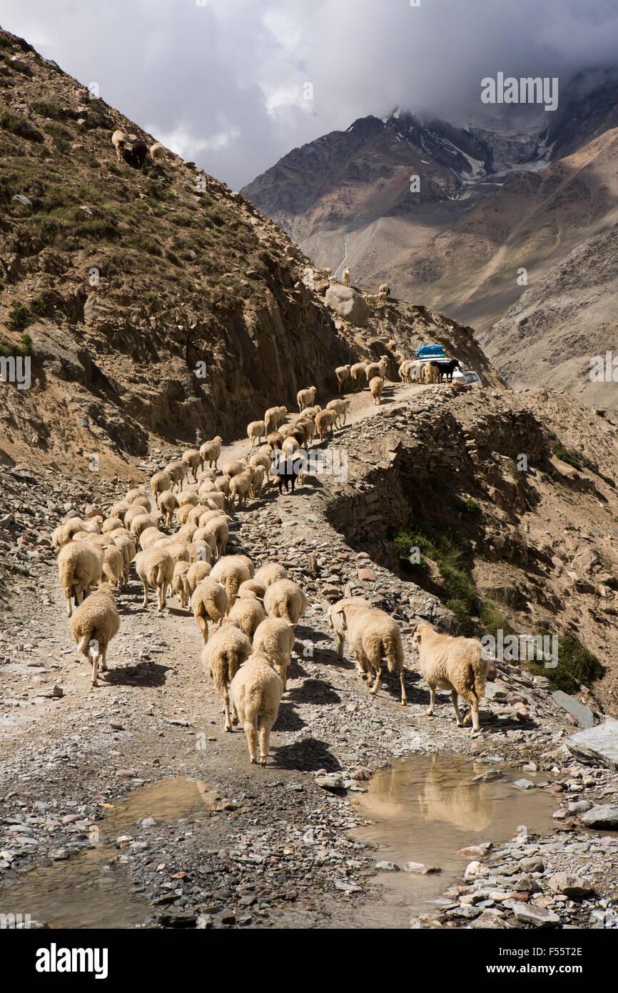 India, Himachal Pradesh, Spiti, Chandra Taal, flock of sheep and goats blocking Kunzum La pass road Stock Photo