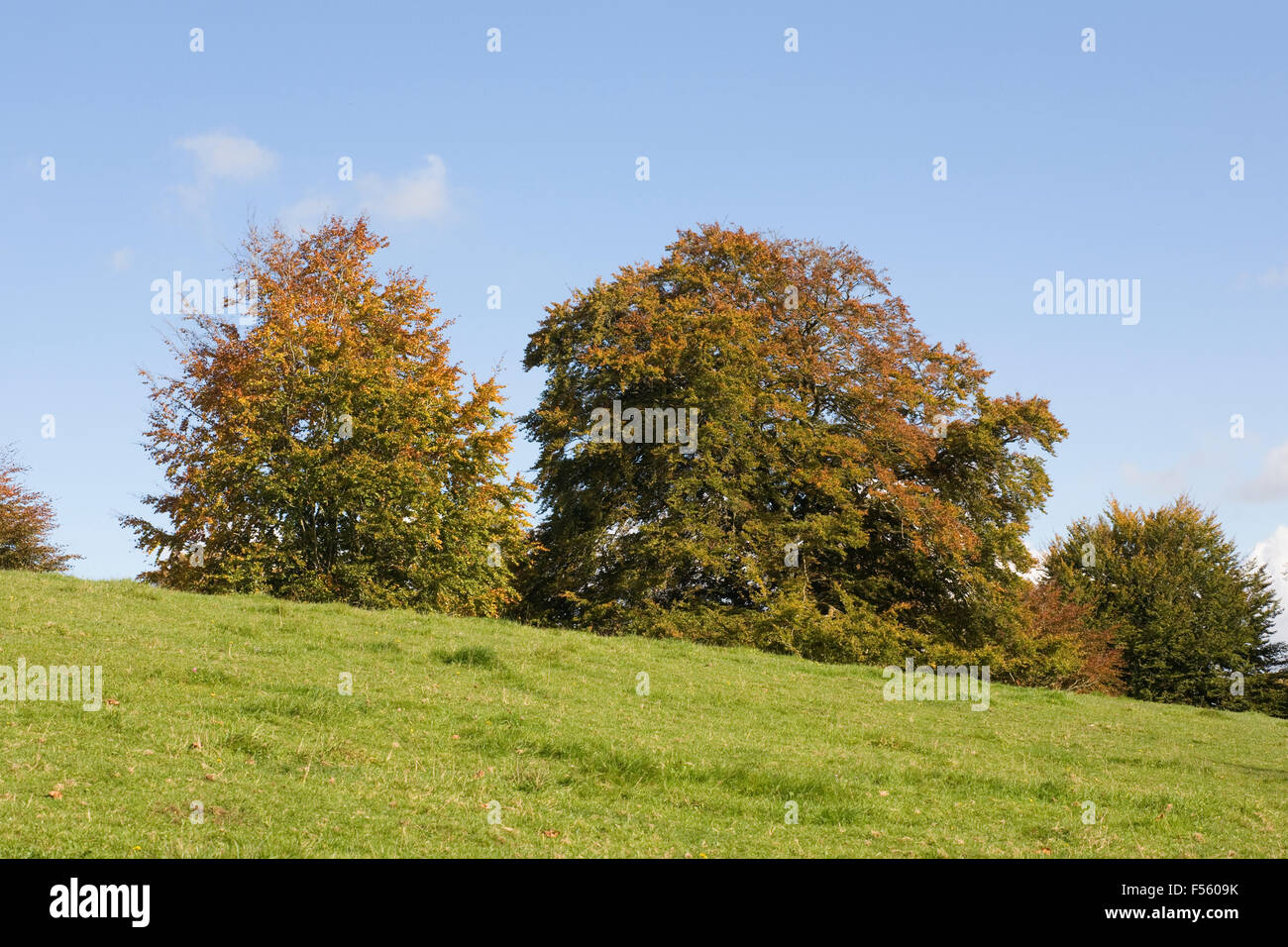 Autumnal trees in the English countryside. - Stock Image