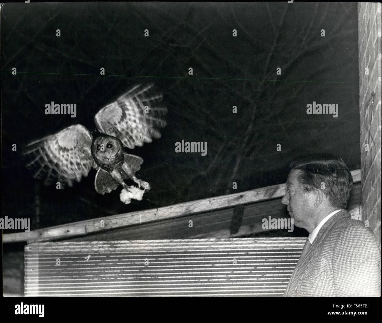 1968 - Caught by the camera - owl and man together  Many