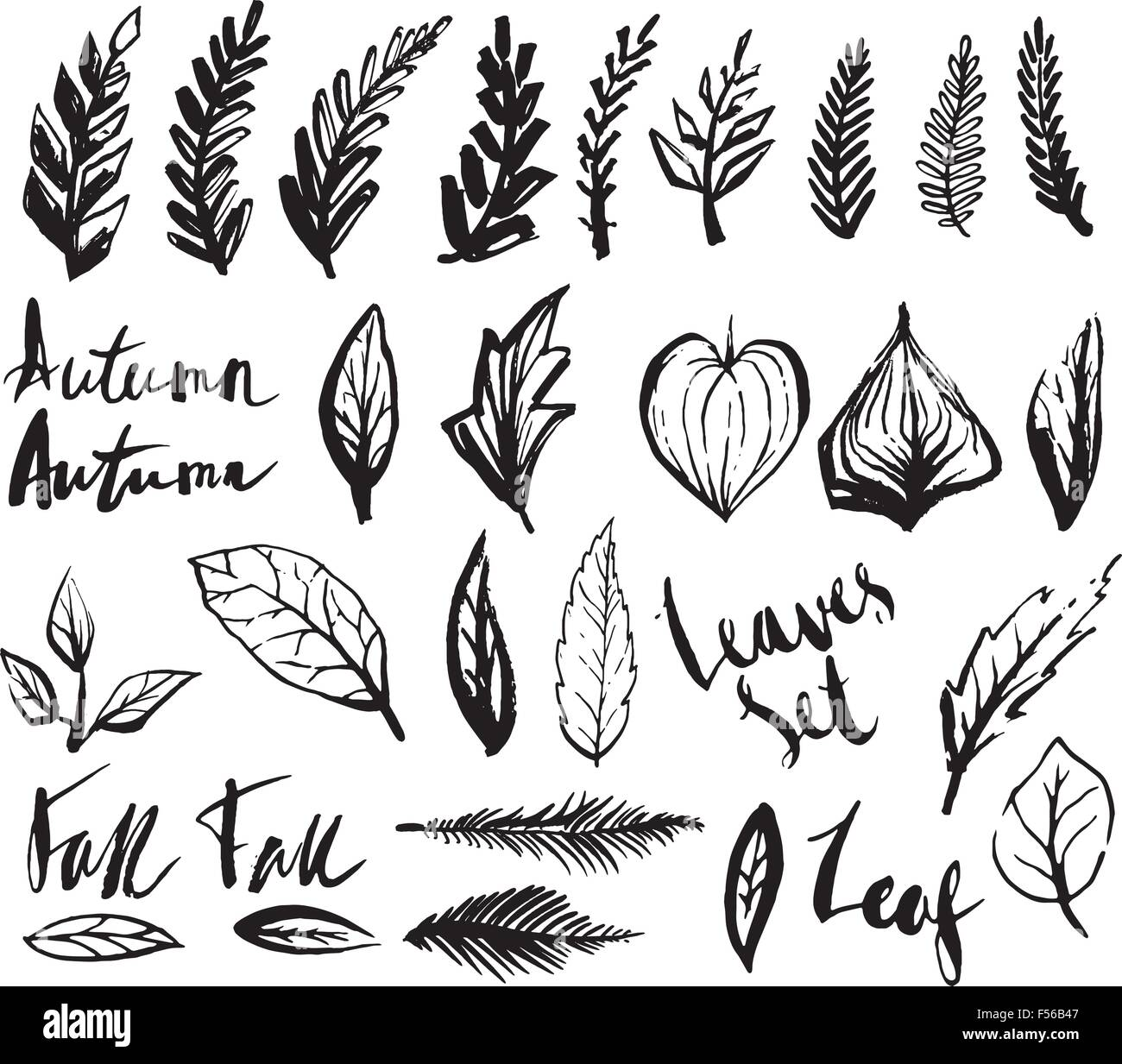Doodle Leaves Set Stock Vector Image Art Alamy